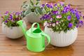beautiful pansy summer flowers in flowerpots in garden - PhotoDune Item for Sale