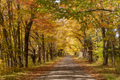 Secluded Narrow Lane Road Tree Leaves Autumn Season Fall Colors - PhotoDune Item for Sale