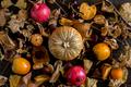 pumpkin background - PhotoDune Item for Sale