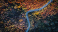 Overhead Aerial Shoot of road through colorful  forest.Shoot From air. - PhotoDune Item for Sale