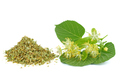 Fresh and dried linden blossom - PhotoDune Item for Sale
