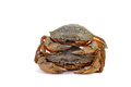 Live crabs on a white background. - PhotoDune Item for Sale