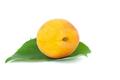 Ripe apricot - PhotoDune Item for Sale