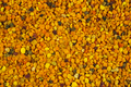 Background: bee gathered pollen granules - PhotoDune Item for Sale