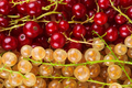 Red and white currant berries - PhotoDune Item for Sale
