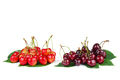 Two piles of diffrent cherries - PhotoDune Item for Sale