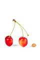 Red cherries and pit - PhotoDune Item for Sale