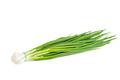 Green onion - PhotoDune Item for Sale