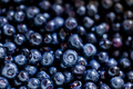 Blueberries background - PhotoDune Item for Sale