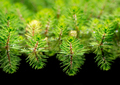 Watermilfoil plants in a pond - PhotoDune Item for Sale