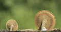 Mushroom from underneath - PhotoDune Item for Sale