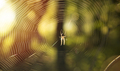 Spider web autumn forrest sun shine. - PhotoDune Item for Sale