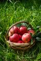 Red ripe apple in basket - PhotoDune Item for Sale