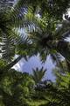 Tree canopy palm tree new zealand - PhotoDune Item for Sale