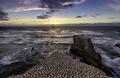 New Zealand muriwai beach gannet birds - PhotoDune Item for Sale