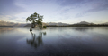 Wanaka tree in the lake reflection - PhotoDune Item for Sale
