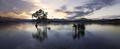Wanaka tree sunset lake south island of new zealand. - PhotoDune Item for Sale