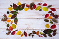 Fall acorns, leaves, cones frame on the white painted table - PhotoDune Item for Sale