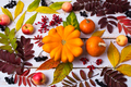 Fall leaves, pumpkin, berries on the white painted wood - PhotoDune Item for Sale