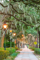 Savannah, Georgia, USA tree lined sidewalks - PhotoDune Item for Sale