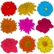 Color Flowers on White Background - GraphicRiver Item for Sale