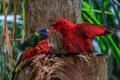 colorful parrots in Loro Park in Tenerife, Spain - PhotoDune Item for Sale
