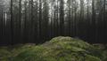green misty pine tree forest dark background - PhotoDune Item for Sale