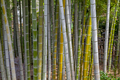 bamboo trunks in Bamboo Forest, Hiroshima, Japan. - PhotoDune Item for Sale