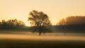 Big tree on meadow - PhotoDune Item for Sale