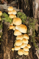 Orange mushroom family growing on ground under a forest. - PhotoDune Item for Sale