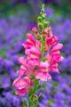Yellow dragon flower in the garden - PhotoDune Item for Sale