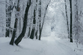Road in frozen winter forest with snow - PhotoDune Item for Sale
