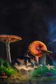 Spooky Halloween concept with a ceramic pumpkin among poisonous mushrooms. Creative autumn still - PhotoDune Item for Sale