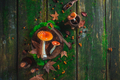 Red toadstool mushrooms on a table with moss and leaves. Potion ingredients header. Autumn flat lay - PhotoDune Item for Sale