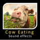 Buffalo Eating and Chewing Sounds