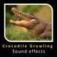 Crocodile Growling Sound