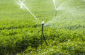 Watering plantation with carrots. Irrigation sprinklers in big c - PhotoDune Item for Sale