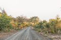 Sunrise landscape between trees on road S60 - PhotoDune Item for Sale