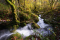 Atlantic Wet Forest with Water Stream - PhotoDune Item for Sale