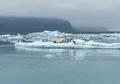 Seal relaxing on a floating iceberg in Jokulsarlon glacial lagoon, Iceland - PhotoDune Item for Sale