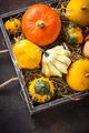Assortment of decorative colorful pumpkins - PhotoDune Item for Sale