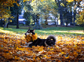 Cute dog with leaves in autumn park - PhotoDune Item for Sale