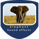 Elephant Bellow and Blowing Sounds