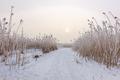 Comana lake in winter - PhotoDune Item for Sale