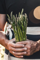 Green asparagus kept in men's hands - PhotoDune Item for Sale