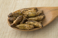 Wooden spoon with crispy small crickets - PhotoDune Item for Sale