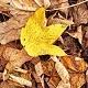 Leaves Impact
