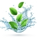 Realistic Vector Water Splash with Green Peppermint Leaves - GraphicRiver Item for Sale