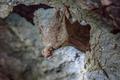 little brown Bat - PhotoDune Item for Sale