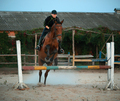 Horsewoman riding on brown horse and jumping the fence in sandy parkour riding arena - PhotoDune Item for Sale
